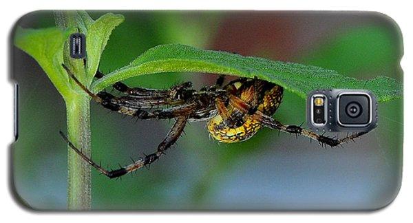Orb Weaver Spider Galaxy S5 Case by Karen Slagle