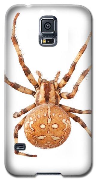 Orb Web Spider Galaxy S5 Case