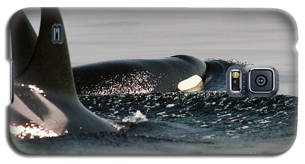 Galaxy S5 Case featuring the photograph Orcas/killer Whales Off The San Juan Islands 1986 by California Views Mr Pat Hathaway Archives