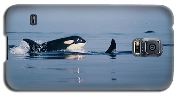 Galaxy S5 Case featuring the photograph Orcas Off The San Juan Islands Washington  1986 by California Views Mr Pat Hathaway Archives