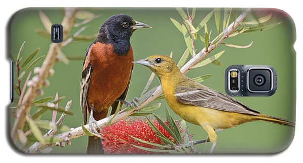 Orchard Oriole Pair Galaxy S5 Case by Bonnie Barry
