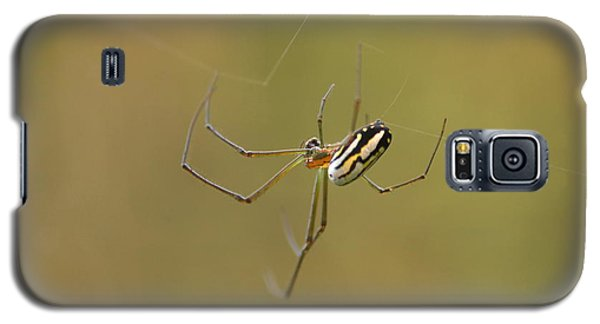 Galaxy S5 Case featuring the photograph Orchard Spider by Greg Allore
