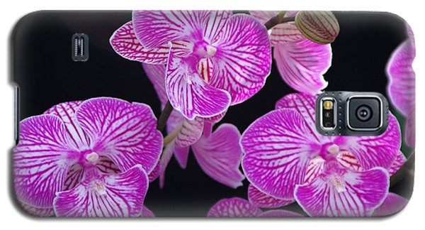 Orchid 1 Galaxy S5 Case by Sheila Byers