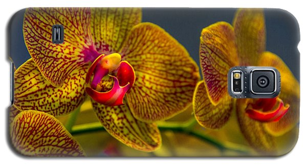 Orchid Color Galaxy S5 Case