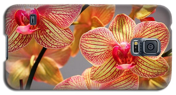 Galaxy S5 Case featuring the photograph Orchid by Judy Palkimas