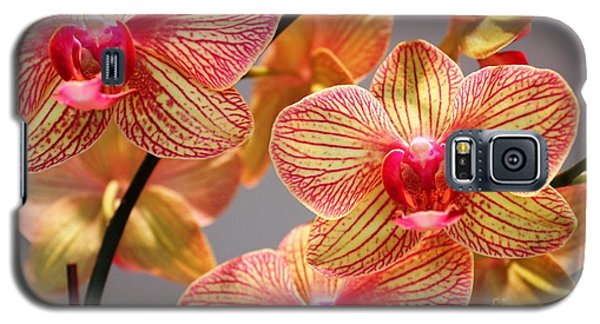 Orchid Galaxy S5 Case by Judy Palkimas