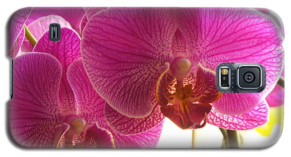 Galaxy S5 Case featuring the photograph Orchid by Lingfai Leung