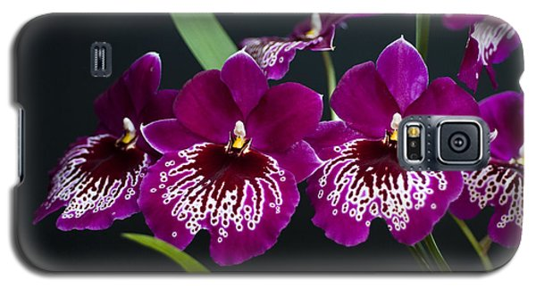 Galaxy S5 Case featuring the photograph Orchid Miltonia by Lana Enderle