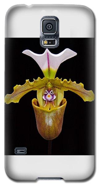 Orchid Paphiopedilum Fairrieanum Galaxy S5 Case