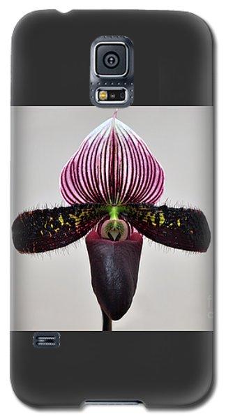 Orchid Paphiopedilum Satchel Paige X Black Beauty Galaxy S5 Case