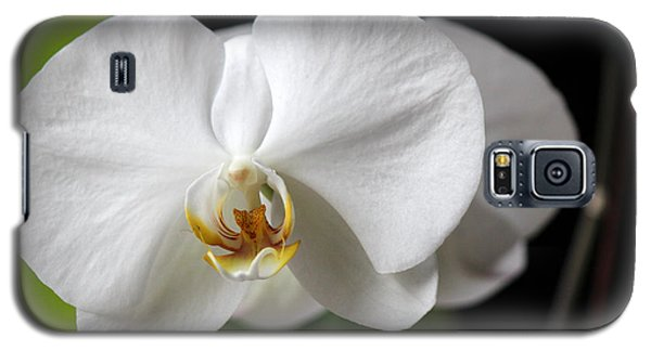 Galaxy S5 Case featuring the photograph Orchid by Silke Brubaker
