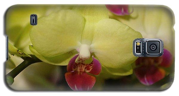 Orchids 181 Galaxy S5 Case by Rudi Prott