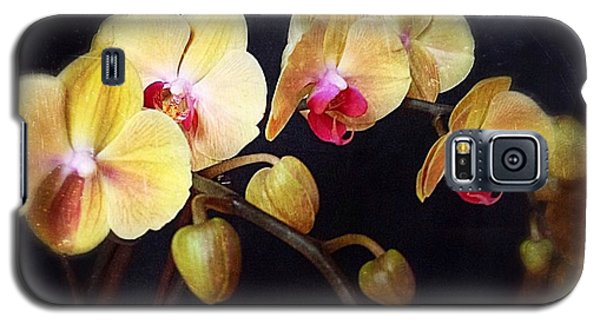 Orchids Arise Galaxy S5 Case by Becky Lupe
