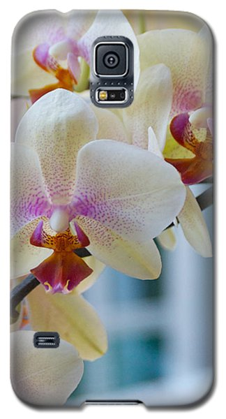 Orchids In The Morning Light Galaxy S5 Case by Debbie Karnes