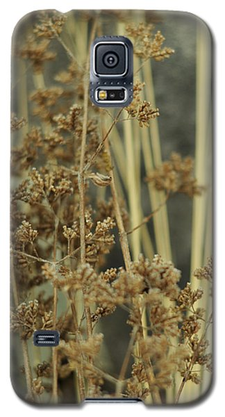 Galaxy S5 Case featuring the photograph Oregano In Winter by Rebecca Sherman