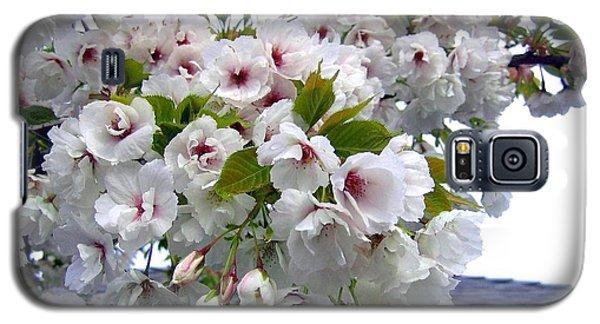Oregon Cherry Blossoms Galaxy S5 Case