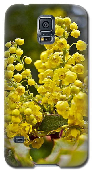 Galaxy S5 Case featuring the photograph Oregon Grape Blossoms by Todd Kreuter