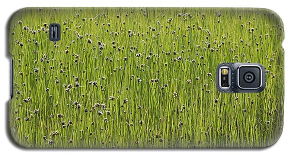 Organic Green Grass Backround Galaxy S5 Case