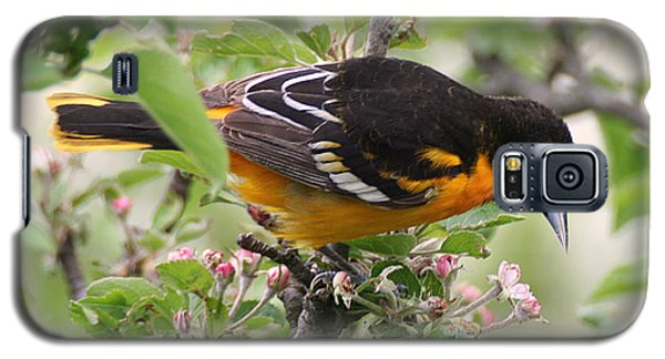 Oriole With Apple Blossoms Galaxy S5 Case