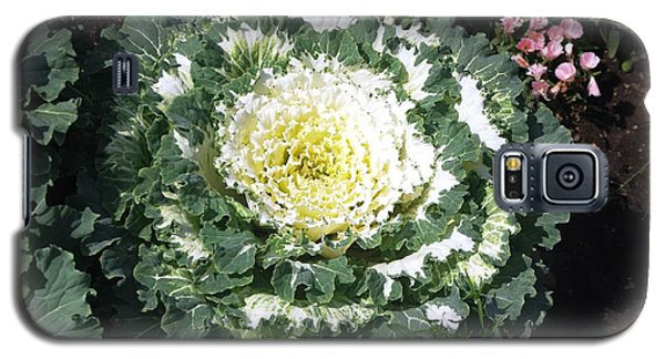 Galaxy S5 Case featuring the photograph Ornamental Cabbage by Sheila Byers