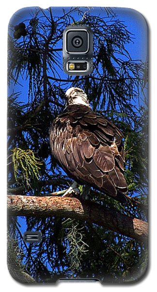 Galaxy S5 Case featuring the photograph Osprey 005 by Chris Mercer