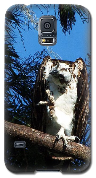 Osprey 104 Galaxy S5 Case by Chris Mercer