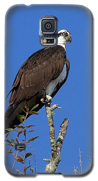 Osprey 109 Galaxy S5 Case by Chris Mercer