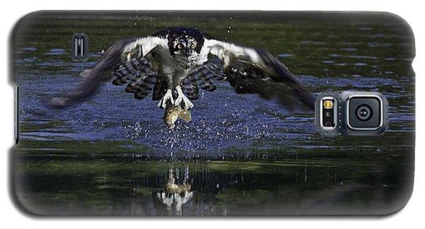Osprey Bird Of Prey Galaxy S5 Case by David Lester
