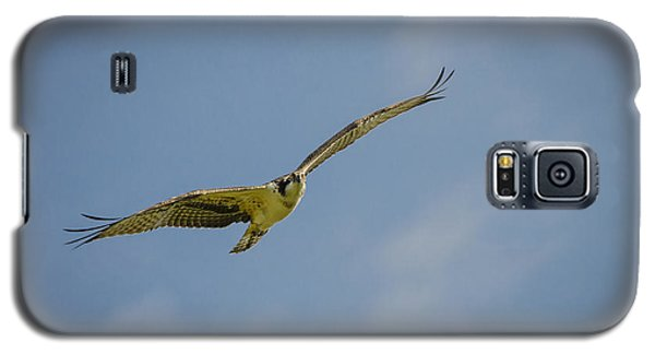 Osprey Galaxy S5 Case by Bradley Clay