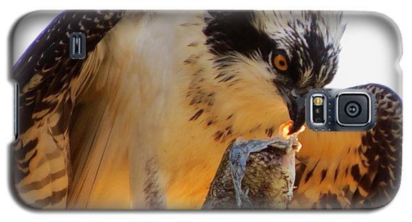 Galaxy S5 Case featuring the photograph Osprey Breakfast by Dianne Cowen