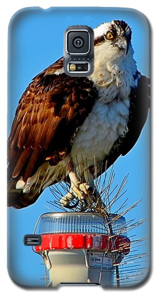 Galaxy S5 Case featuring the photograph Osprey Close-up On Water Navigation Aid by Jeff at JSJ Photography
