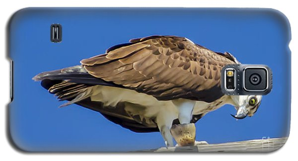 Osprey Eating Lunch Galaxy S5 Case by Dale Powell