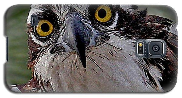 Osprey Eyes Galaxy S5 Case