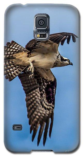 Osprey Galaxy S5 Case - Osprey Flying Away by Robert Bales
