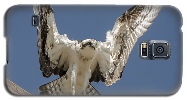Galaxy S5 Case featuring the photograph Osprey Landing by Dale Powell