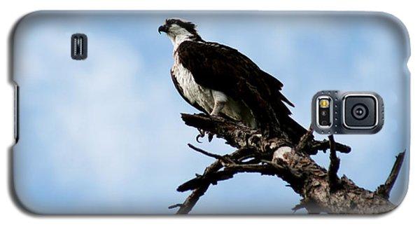 Osprey On Perch Galaxy S5 Case by Marty Gayler