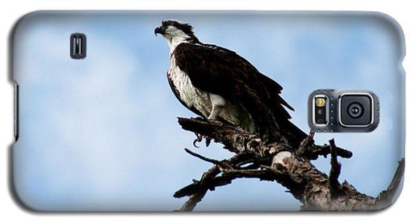 Osprey On Perch Galaxy S5 Case