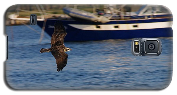Galaxy S5 Case featuring the photograph Osprey On The Hunt by Greg Graham