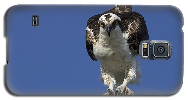 Osprey Photo Galaxy S5 Case