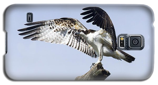 Galaxy S5 Case featuring the photograph Osprey Pride 2 by David Lester