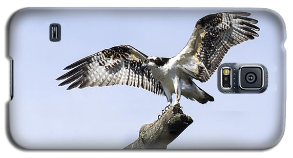 Galaxy S5 Case featuring the photograph Osprey Pride  by David Lester