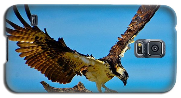 Galaxy S5 Case featuring the photograph Osprey Spreading It's Wings by Pamela Blizzard