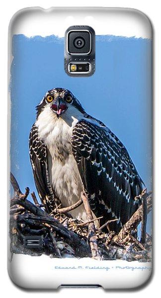 Osprey Galaxy S5 Case - Osprey Surprise Party Card by Edward Fielding
