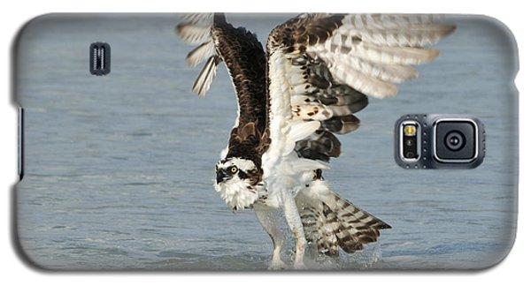 Osprey Taking Off Galaxy S5 Case by Bradford Martin