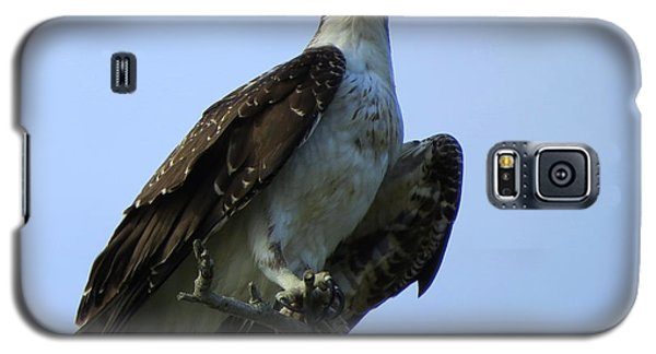 Osprey View Galaxy S5 Case by Phyllis Beiser