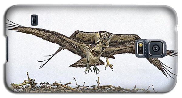 Osprey Wings And Talons Galaxy S5 Case by Constantine Gregory