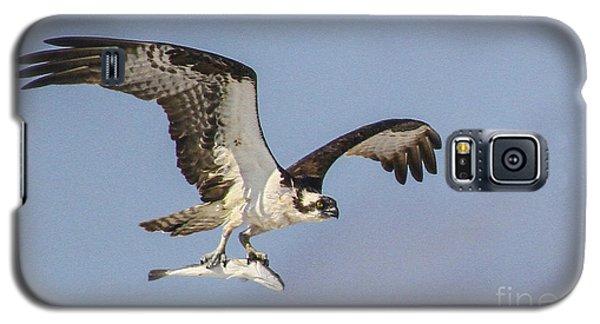 Osprey With Dinner Galaxy S5 Case