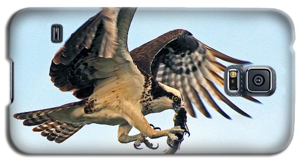 Osprey With Fish 1-6-15 Galaxy S5 Case