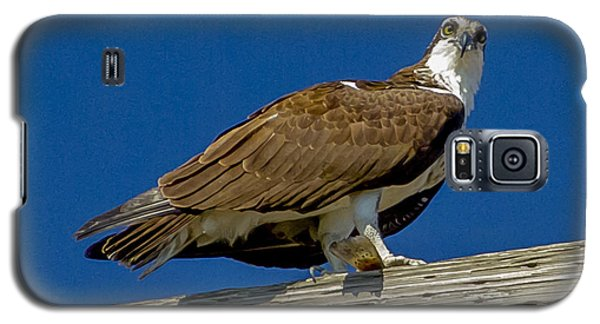 Osprey With Fish In Talons Galaxy S5 Case by Dale Powell