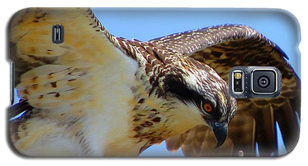 Galaxy S5 Case featuring the photograph Osprey Youth by Dianne Cowen